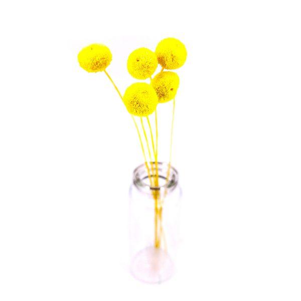 黃色紐扣花乾花