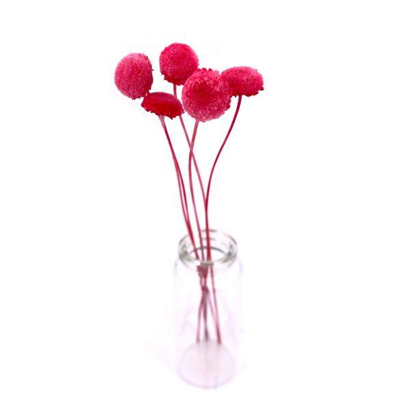 粉紅色紐扣花乾花