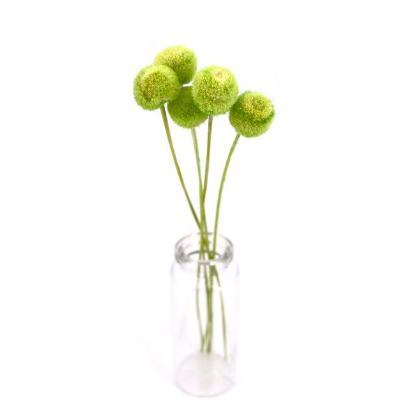 青綠紐扣花乾花