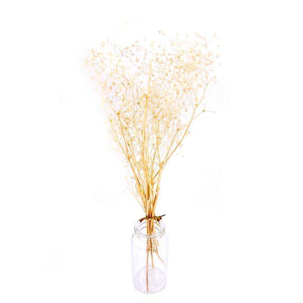 日本米白滿天星乾花
