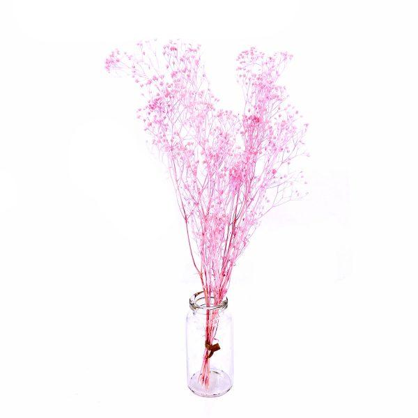 日本粉紅色滿天星乾花
