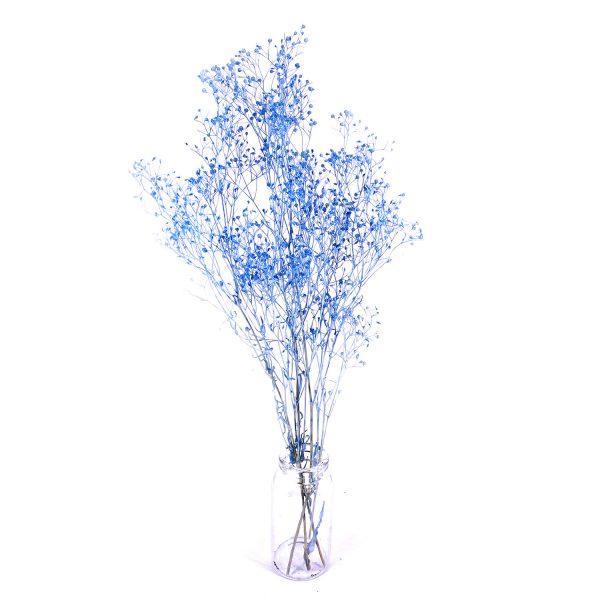 日本灰藍色滿天星乾花