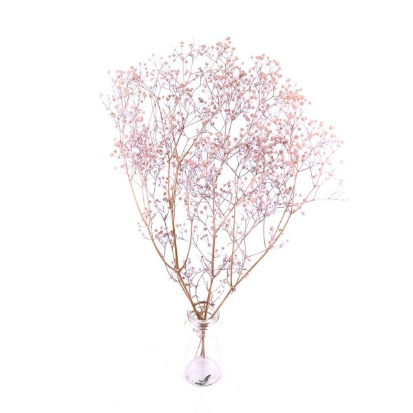 日本淺粉紅色滿天星乾花