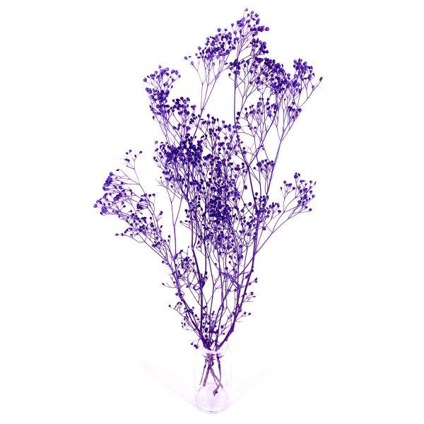 日本紫色滿天星乾花