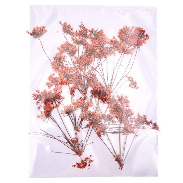 橙色蕾絲花乾花壓花