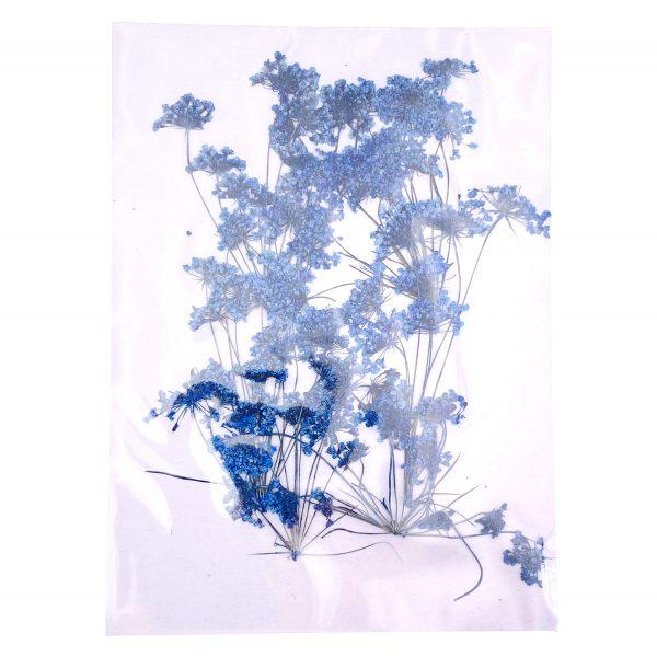 藍色蕾絲花乾花壓花