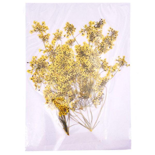 黃色蕾絲花乾花壓花