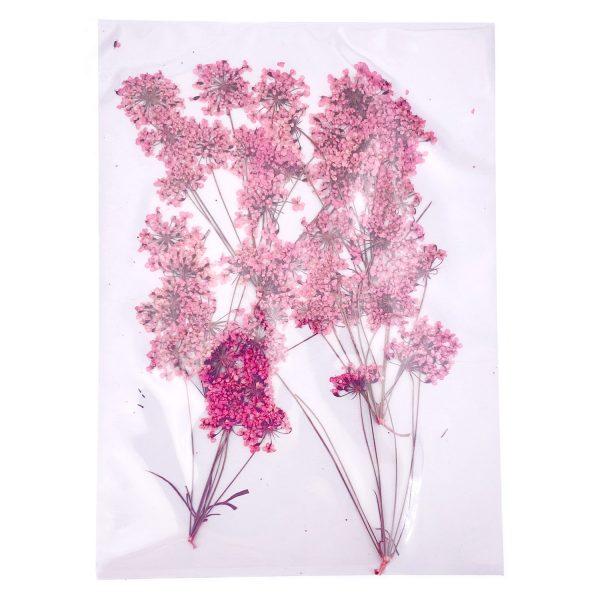 粉紅色蕾絲花乾花壓花