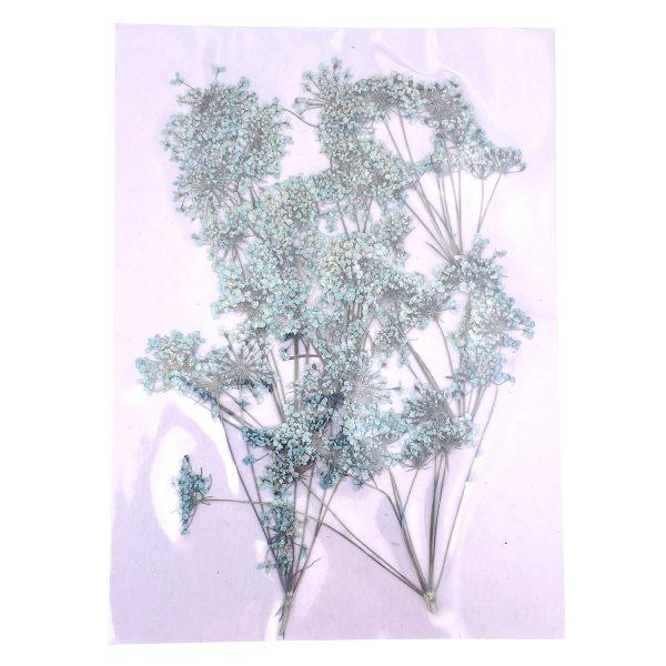 淺綠蕾絲花乾花壓花