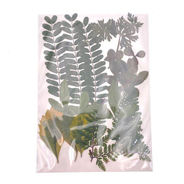樹葉乾花押花組合包4