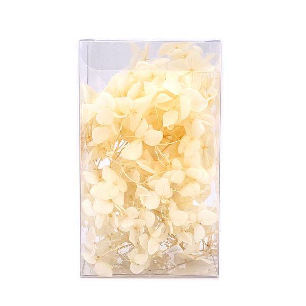 繡球花保鮮花-米白