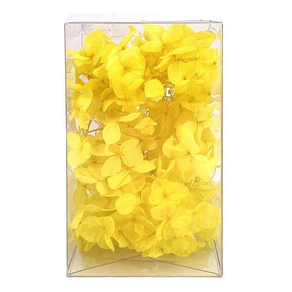 繡球花保鮮花-黃色