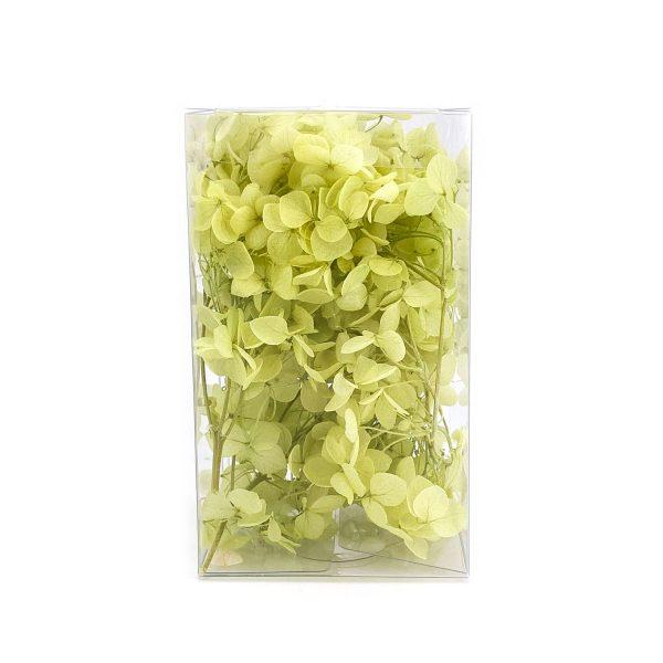 繡球花保鮮花-青綠色