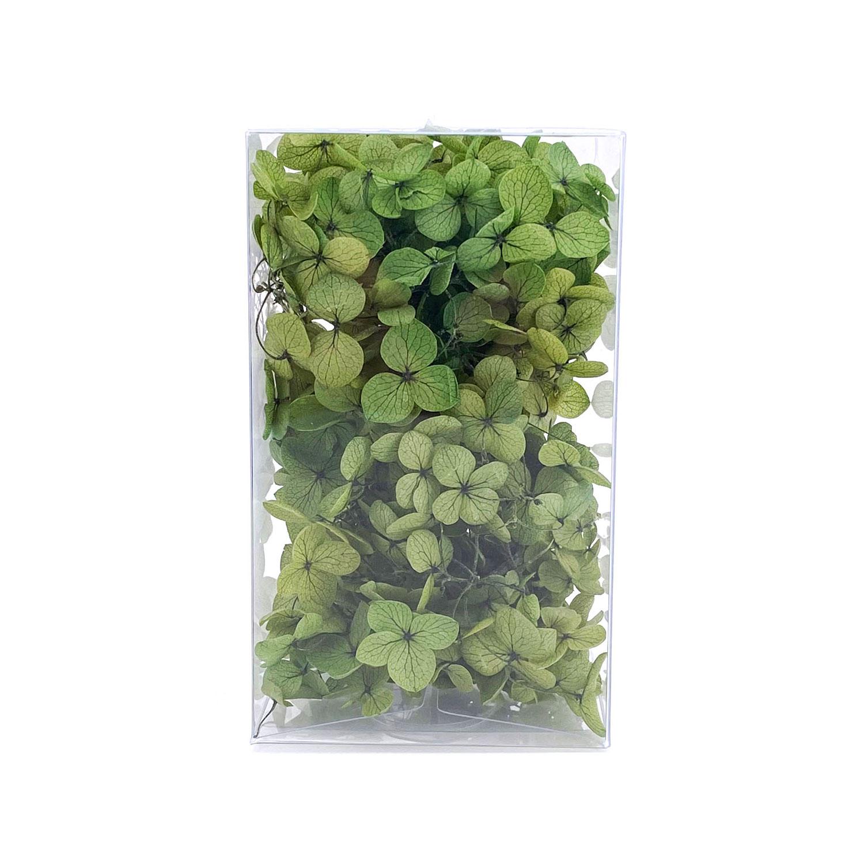 繡球花保鮮花-綠色