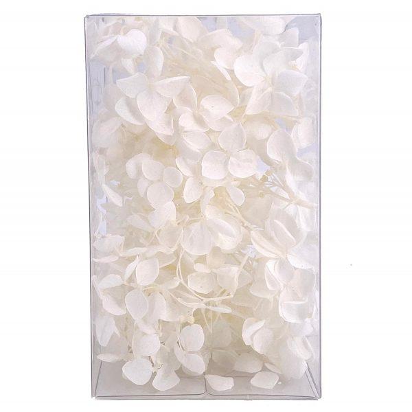 繡球花保鮮花-白色