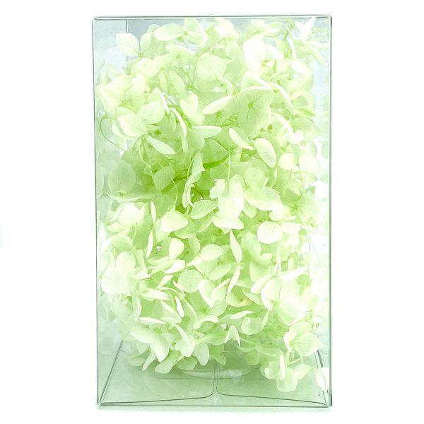 繡球花保鮮花-蘋果綠