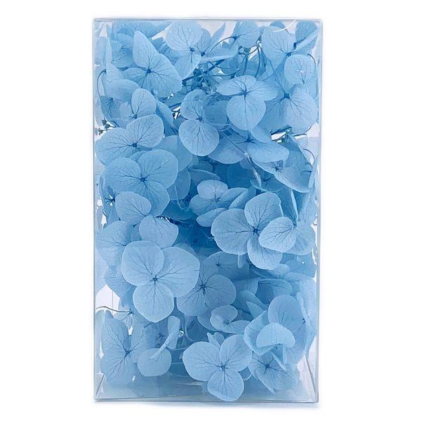 繡球花保鮮花-水藍
