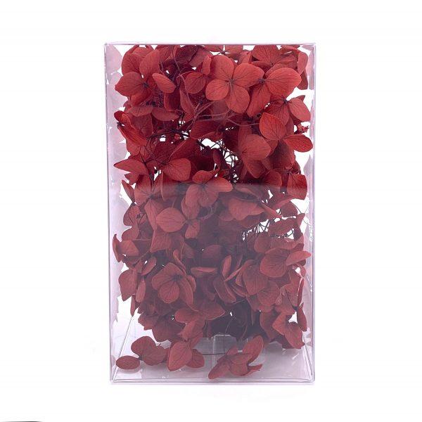 繡球花保鮮花-暗紅色