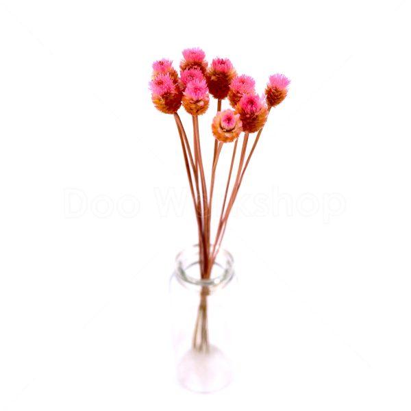 粉紅色快樂花乾花