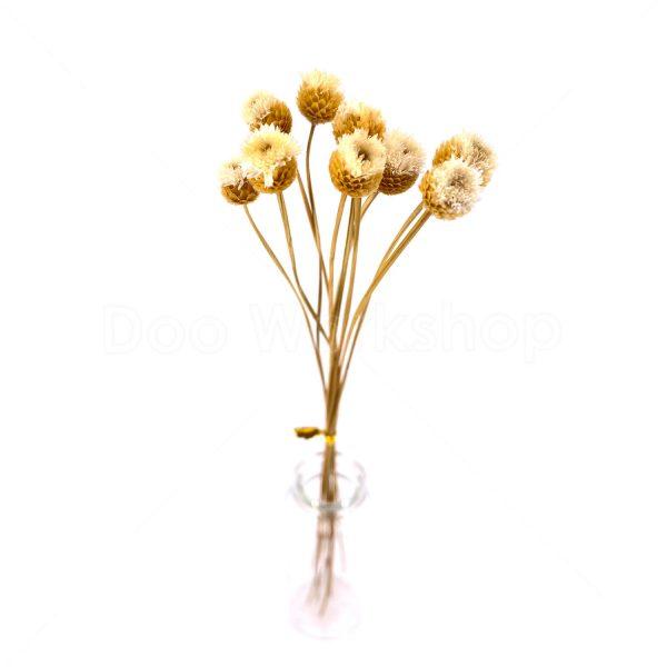 米白色快樂花乾花