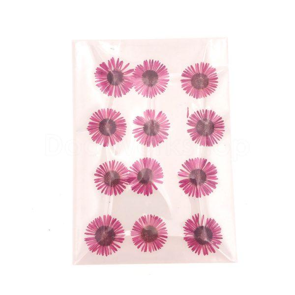粉色針菊乾花押花