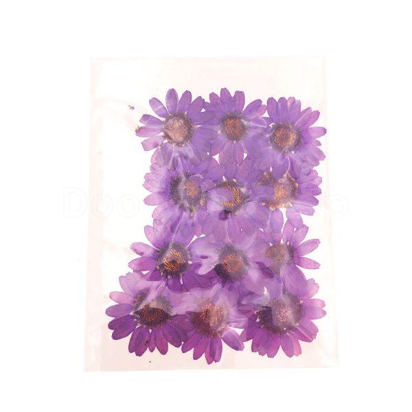 紫色晶菊乾花押花