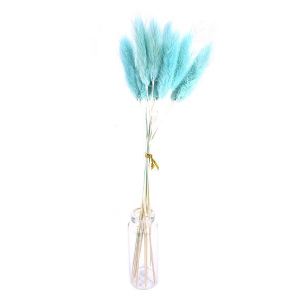 淺綠色鼠尾草乾花