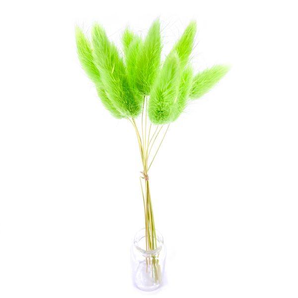 青綠寶石草乾花