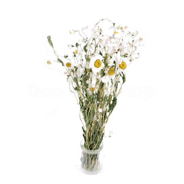 白牡丹乾花