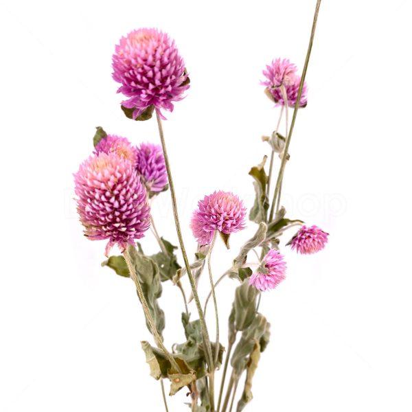 千日紅乾花花束