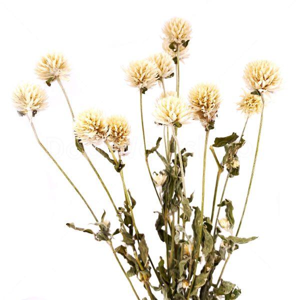 千日白乾花花束