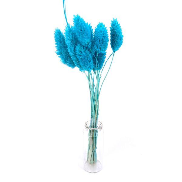 湖水藍寶石草乾花