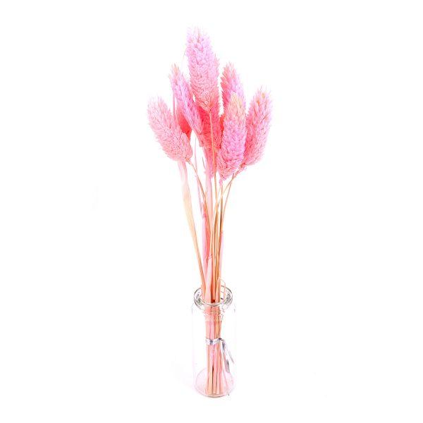 粉紅寶石草乾花