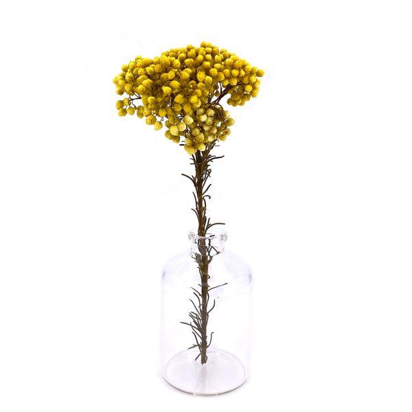黃色小米花乾花
