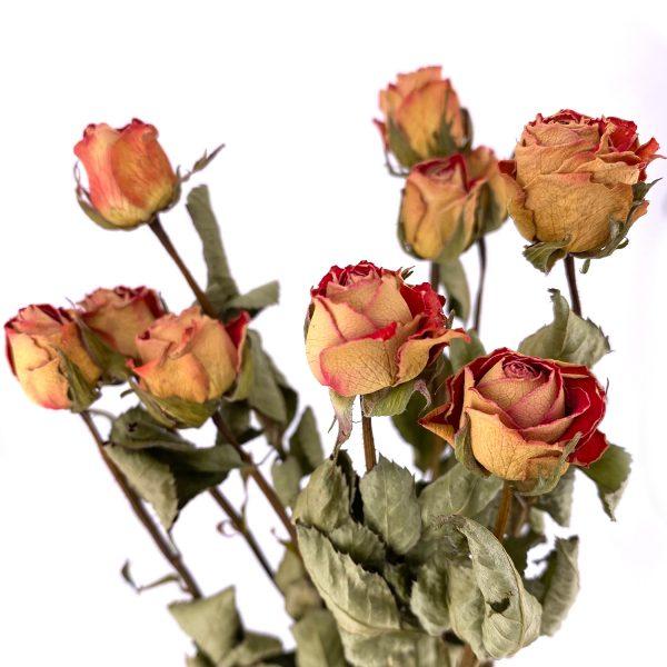 復古紅玫瑰乾花花束