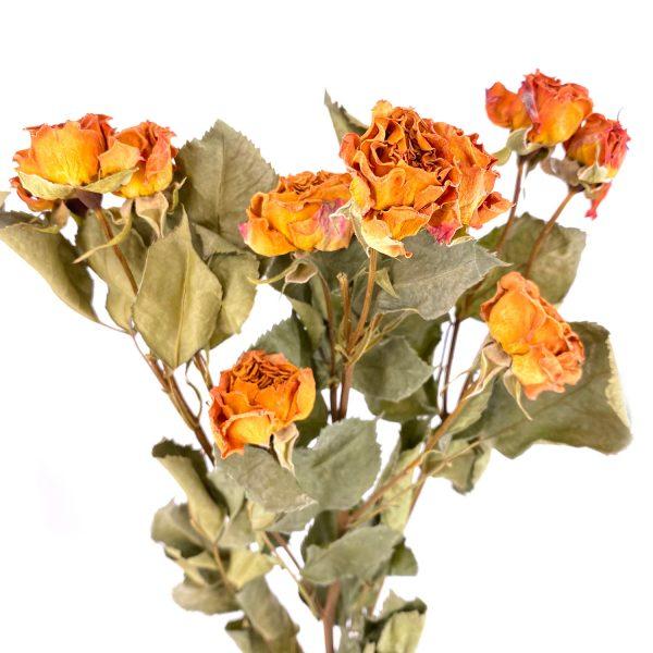復古橙玫瑰乾花花束