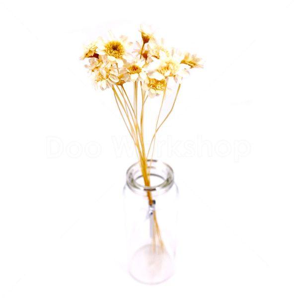 米白色日本小星花乾花