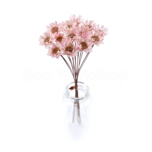 櫻花粉小星花乾花