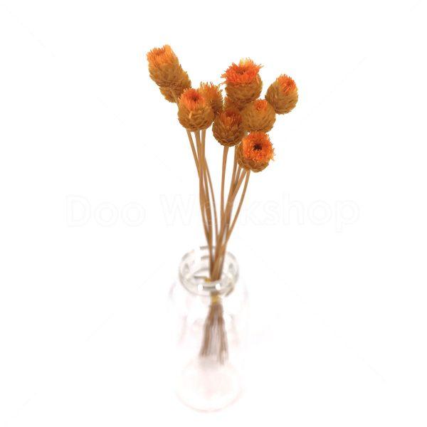 橙色快樂花乾花