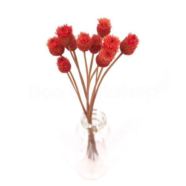 紅色快樂花乾花