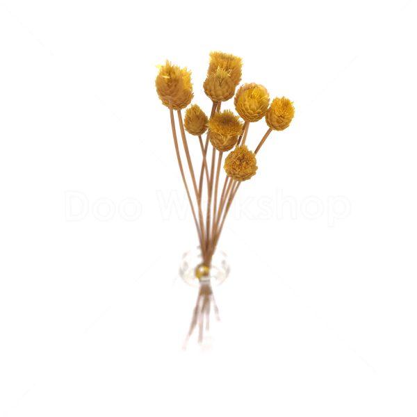 黃色快樂花乾花
