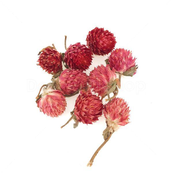 紅巧梅乾花