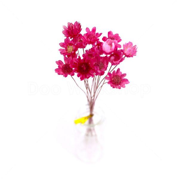 粉紅小星花乾花