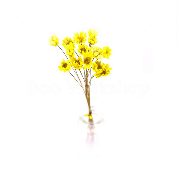 黃色小星花乾花