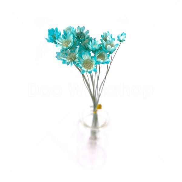 蒂芙尼藍小星花乾花