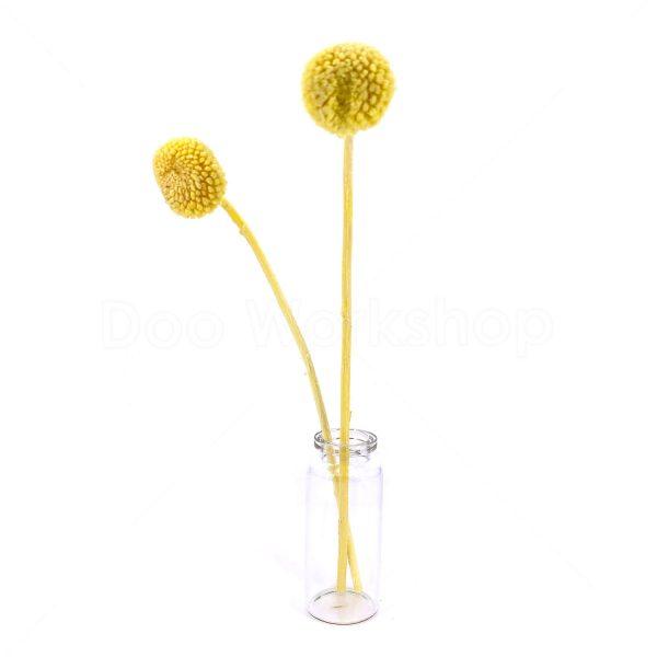 黃色黃金球乾花