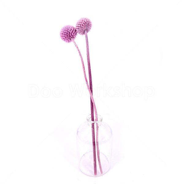 粉紫色黃金球乾花