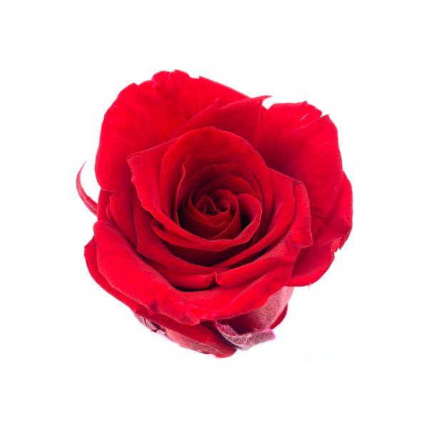 玫瑰保鮮花永生花-紅色4-5CM
