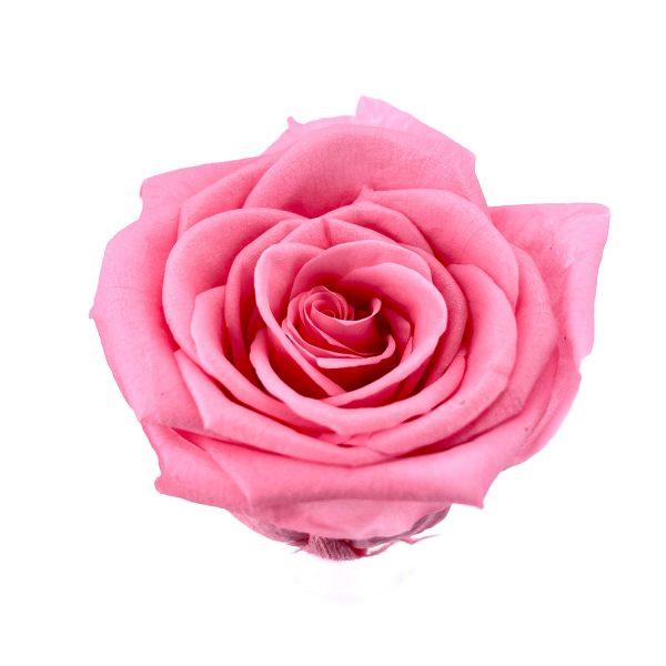 玫瑰保鮮花永生花-粉紅5-6CM