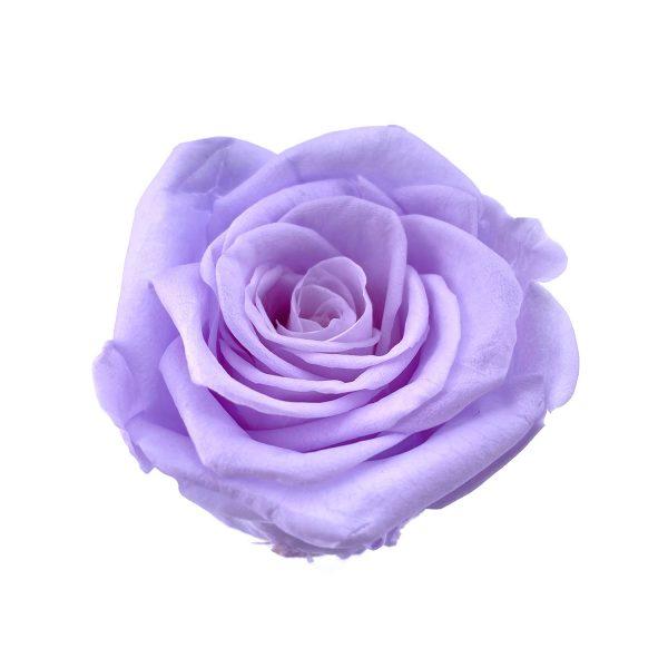 玫瑰保鮮花永生花-淺紫5-6CM